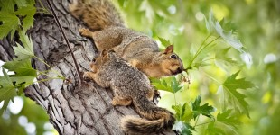 Mamma squirrel and her baby