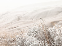 Shrub steppe covered in hoar frost