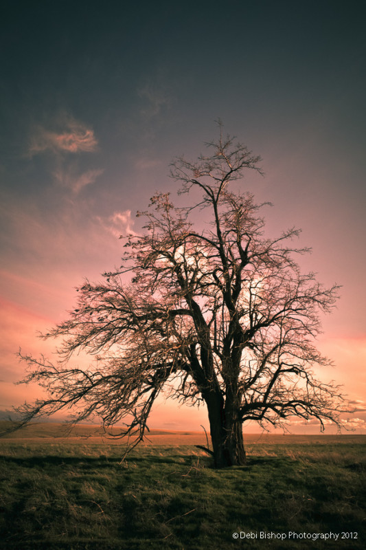 Bare tree in silhouette