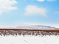 winter in the vineyards