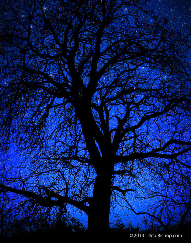 Starry Night Tree Silhouette