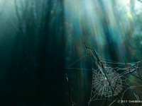 Spider Web & Sunbeams