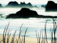 Oregon Coast Shoreline
